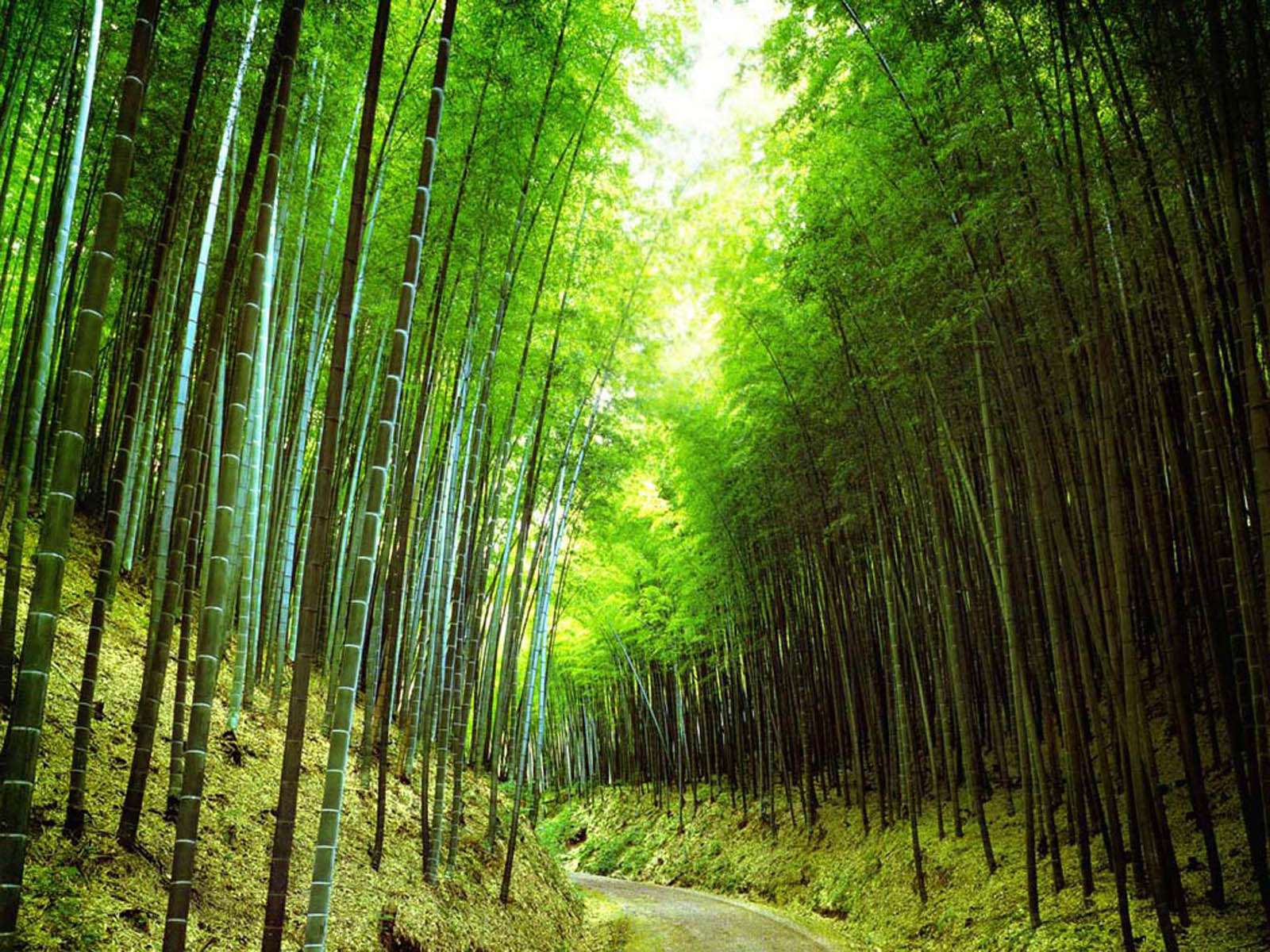 wallpaper: Bamboo Forest Wallpapers