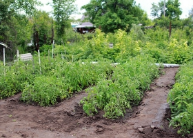 Picture of a small vegetable garden.