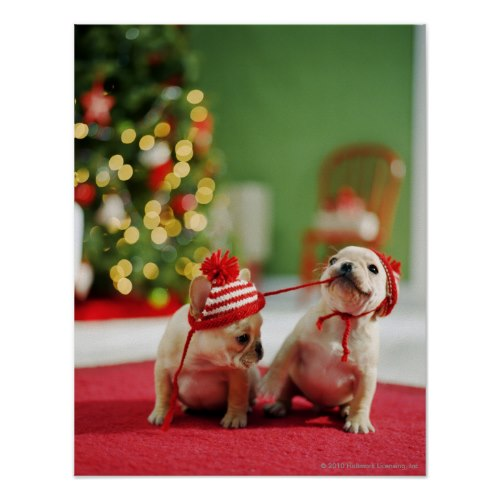 Cute Playful Christmas Puppies   Photo Poster