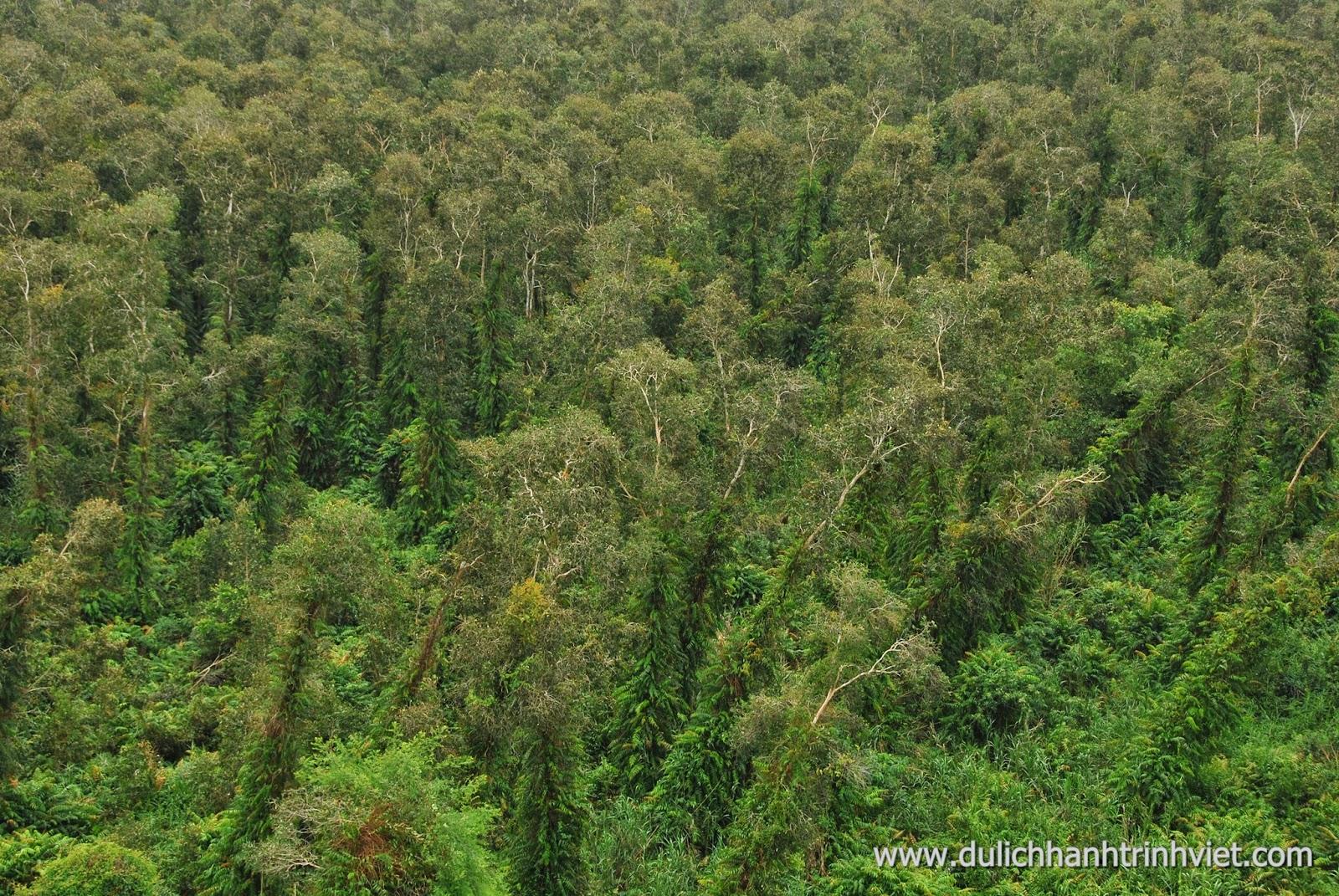 Tham quan Rừng quốc gia U Minh Hạ ở Cà Mau