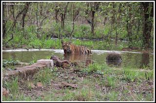 Shivanzhari's Cub in Zhari zone