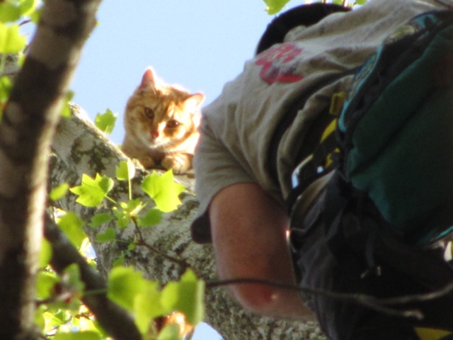 Help! My cat is stuck in a tree!: Before You Call