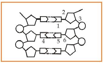 Biologi gonzaga september 2016 16 jumlah nukleotida pada rangkaian di bawah ini adalah ccuart Images