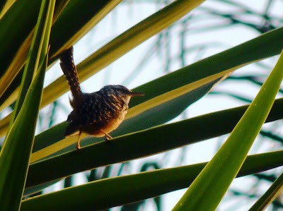 Birding Queretaro Xalapa Parque Ecologico Macuiltepetl
