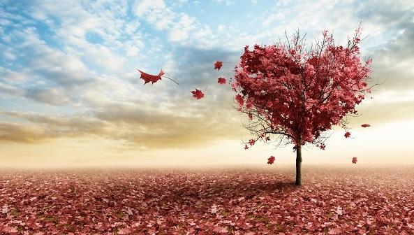 Dashura e Pashpërblyer është gjëja më e mirë që ndodh në jetë, ja përse