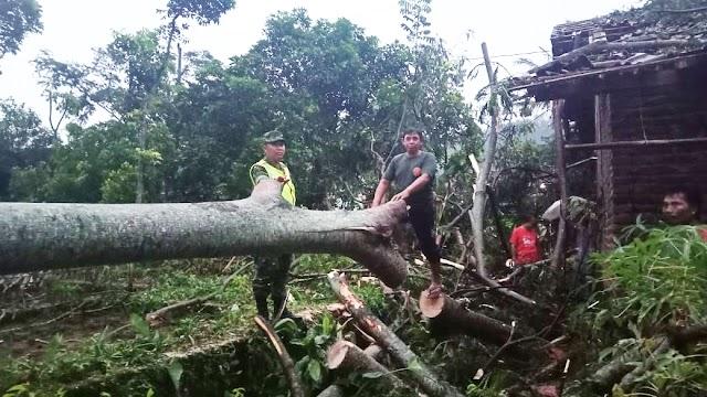 Hujan dan Angin Kencang Tumbangkan Pepohonan, Balai Desa dan Rumah Warga Rusak