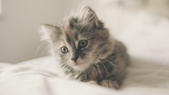 Wallpaper: Cutest Kitten
