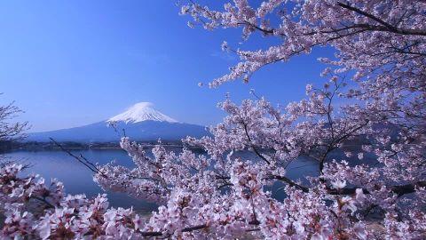 Traveling japan and sakura bloosom, penerbangan ke jepang,Visa jepang,Hotel di jepang,liburan ke jepang