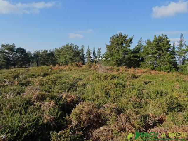 Viesca Redonda, cubierta de cotoyas y matorral