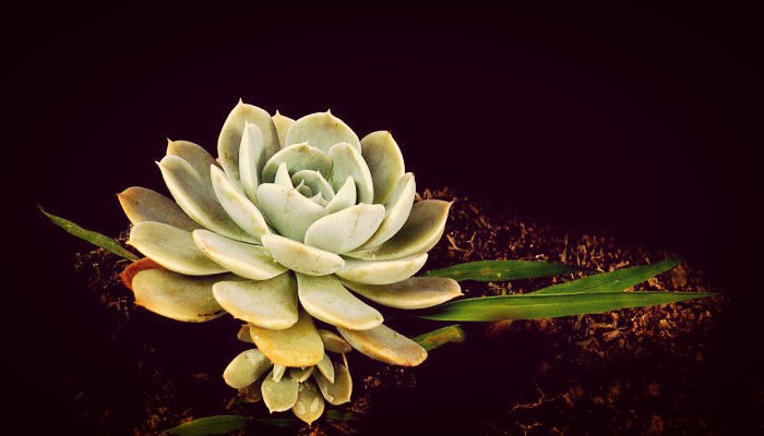 Flor de marmol