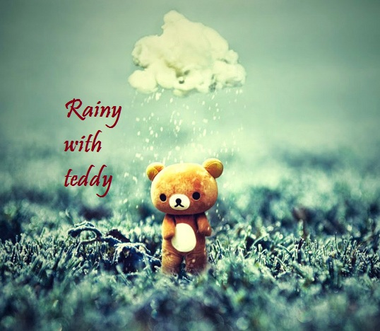 Teddy Day Rain Whatsapp Status DP