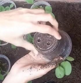 image Vertical Farm Grow Mustard in Narrow Land