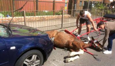 Kuda yang sekarat di jalan