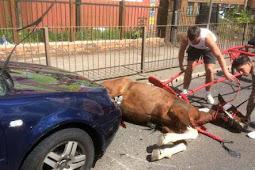 'Berburu' Orang yang Meninggalkan Kuda Sekarat di Jalan
