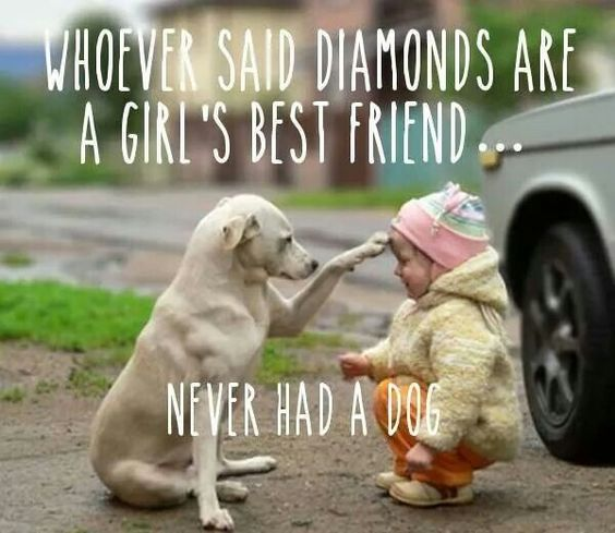 Puppy Photos With Quotes