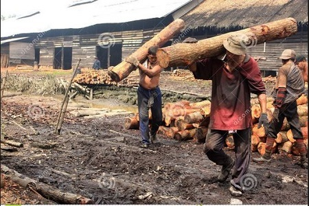 Federal Government Bans Woods, Charcoal Exportation