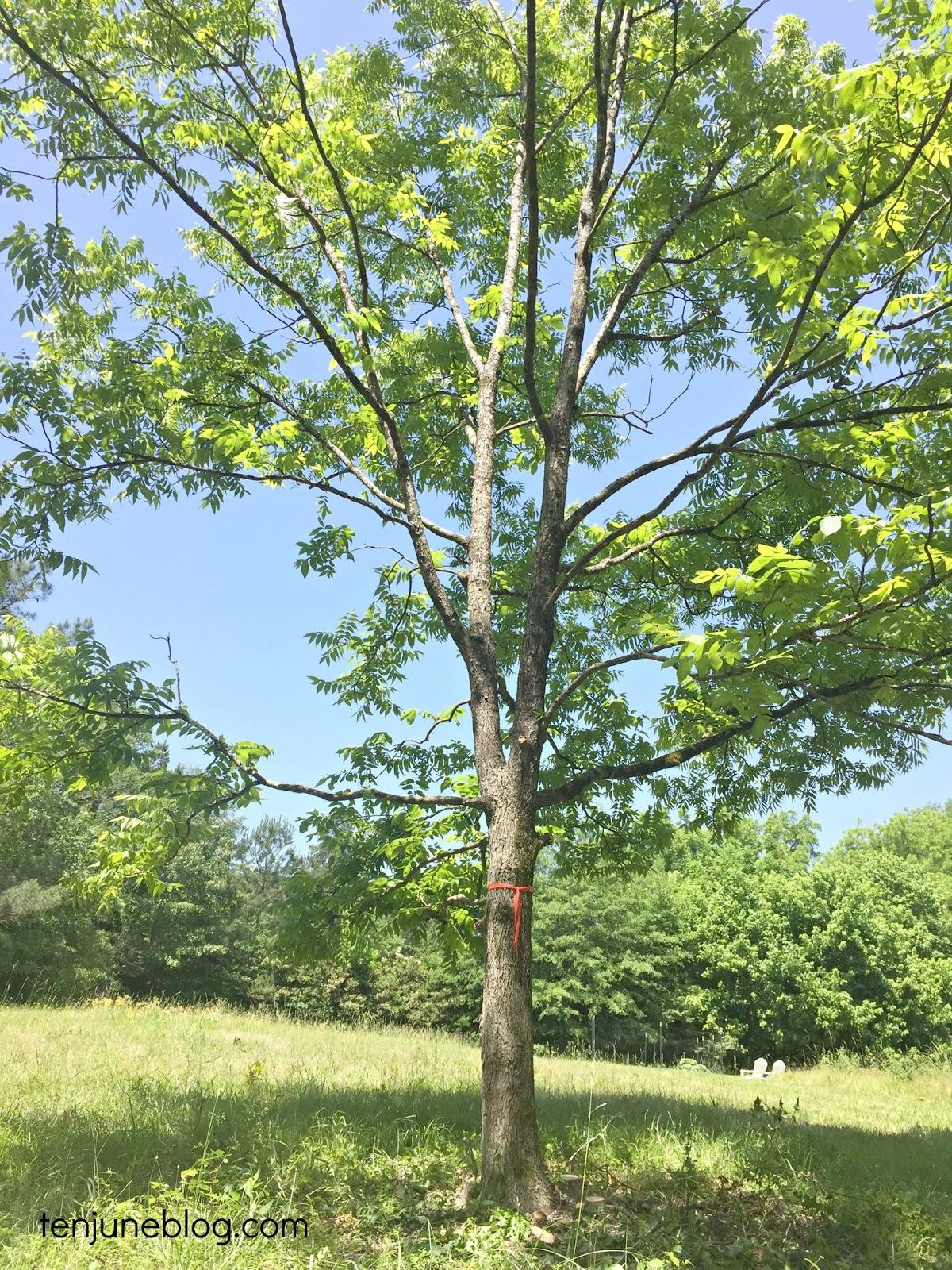 Ten June Farm Trees Tire Swings