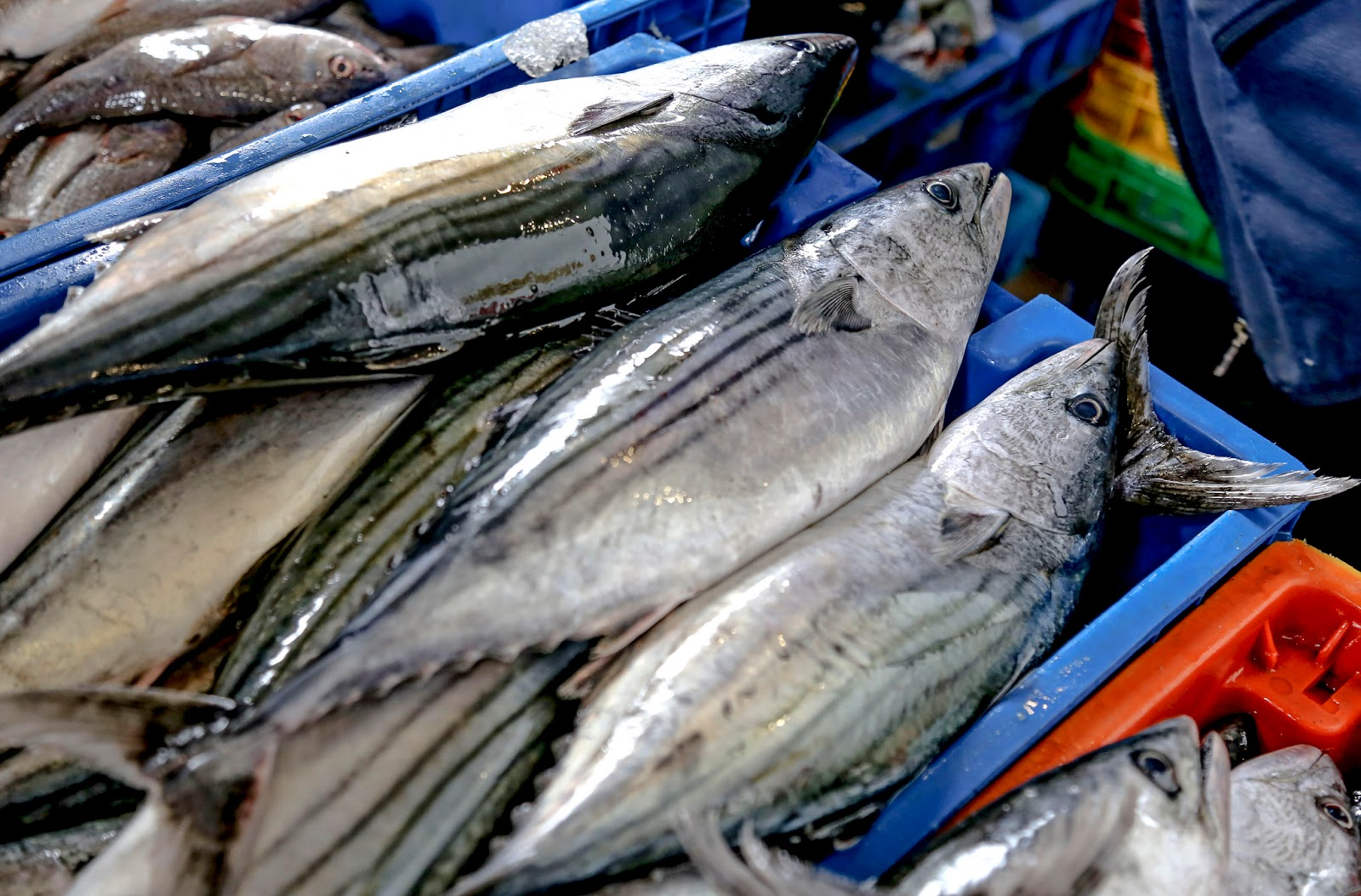 Día Mundial de la Salud: 3 razones para consumir pescado - Salud en ...