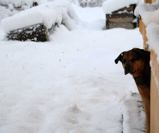 Rambo looking out at the snow