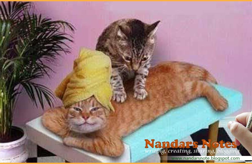 Notes Of Nandar Kucing Lucu Dan Unik