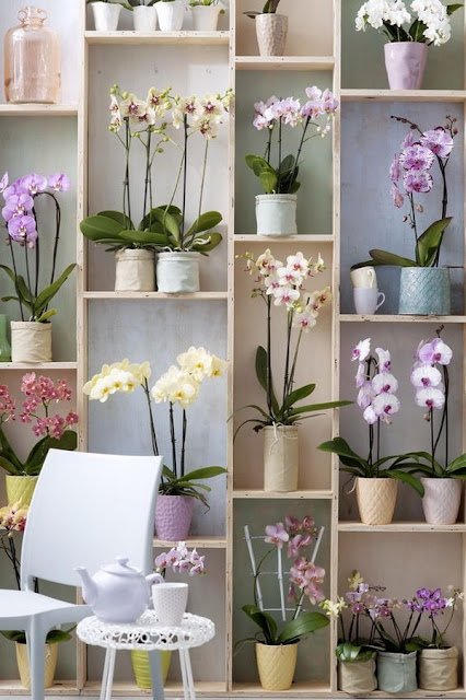 Decorate Your Interior With Orchids 7