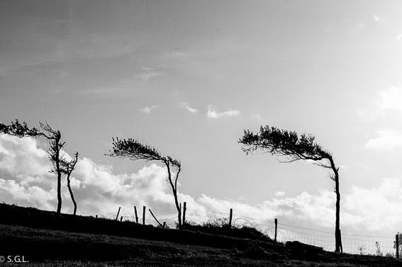 Paisaje en reto 5 fotos en blanco y negro
