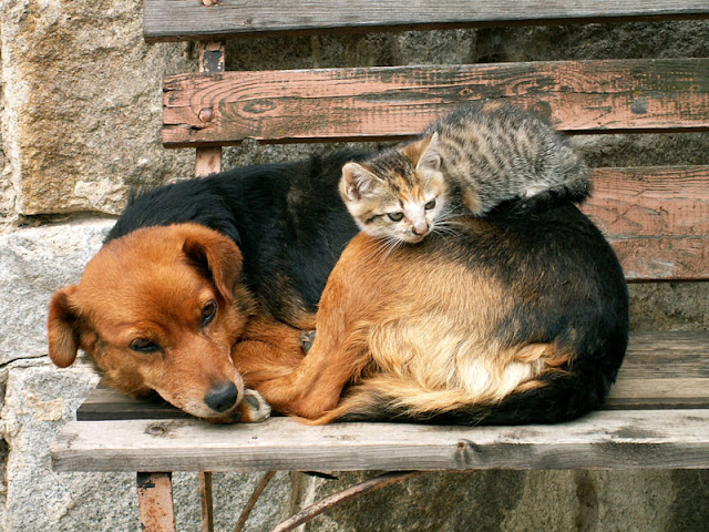 Cat and dog curled up sleeping together