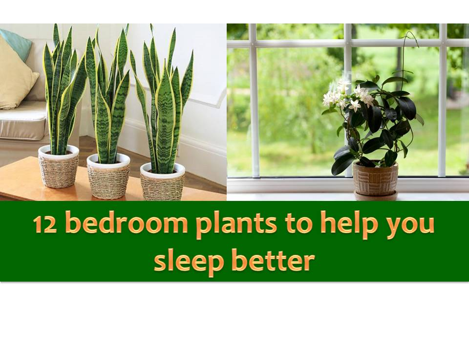 Consider Growing Plants In Your Bedroom That Promotes A Good Night Sleep.  Here Are 12 Different Kinds Of Plants To Consider In Your Nightstand Or  Bedroom ...
