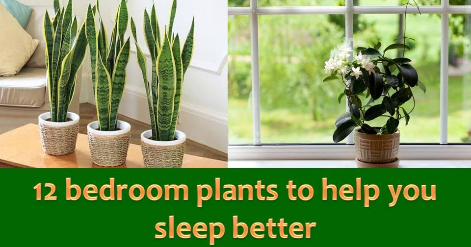 12 Bedroom Plants That Will Help You Sleep Better