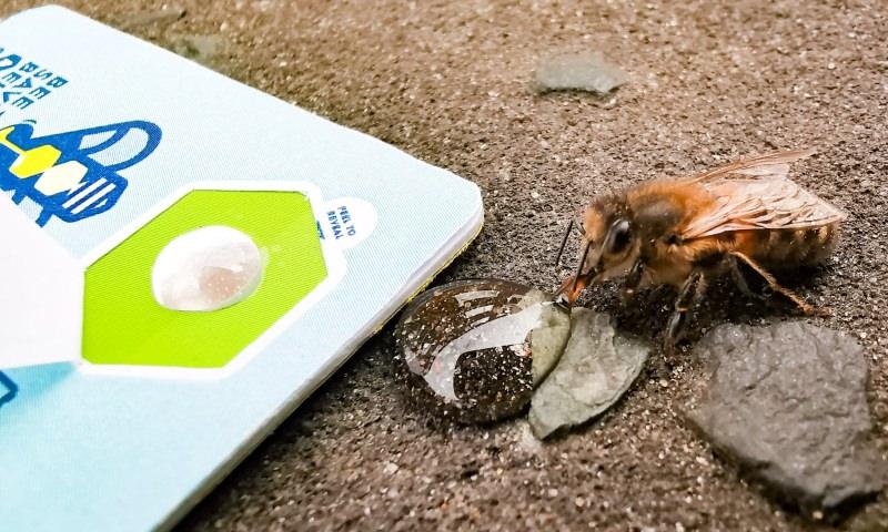 Cartão Bee Saviour