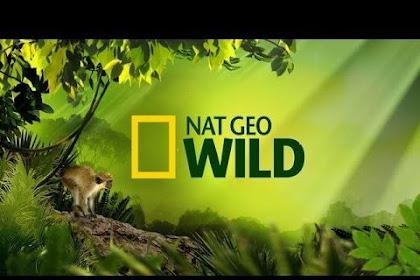 NatGeo Wild Central Europe - Belintersat Frequency