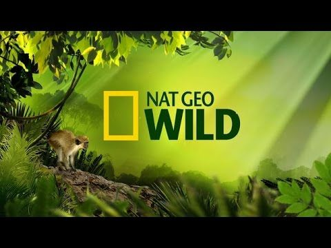 NatGeo Wild Central Europe - Belintersat Frequency
