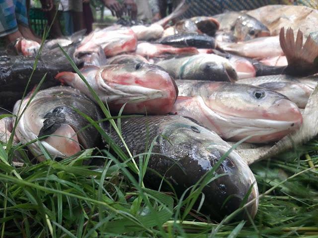 Bangladesh Fish Picture | Bangladesh Fish Photo
