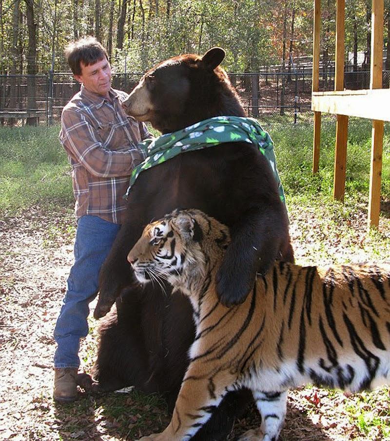 http://4.bp.blogspot.com/-CB5S8qzFEiw/U-E7wvvPoII/AAAAAAAABB0/ETJfo4Fjh-0/s1600/Animal+Friendship+14.jpg