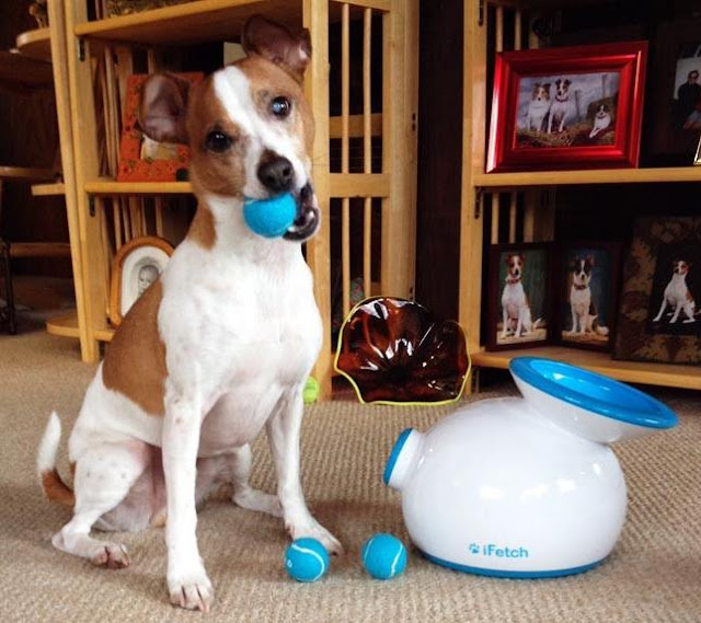 Lanzador de pelotas automático para perros iFetch