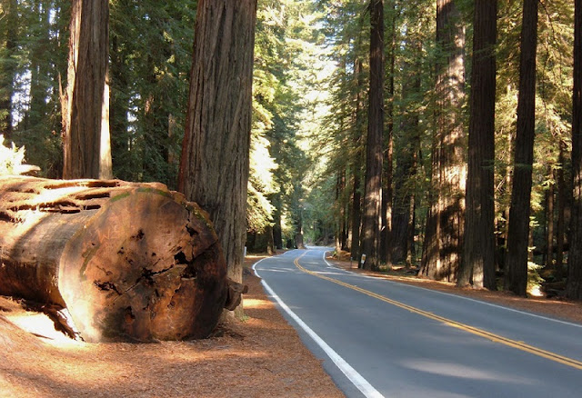 Avenue of the Giants na Califórnia