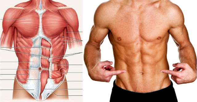 Three Lower Ab Workout Routines For Better Abs