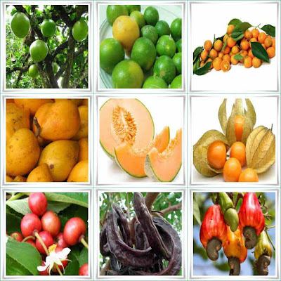 Fruit Names That Start With C
