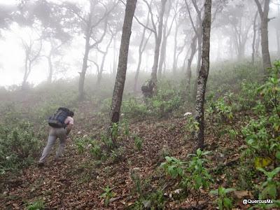 Ascendiendo el Picacho Plano en el Cerro Grande de Ameca