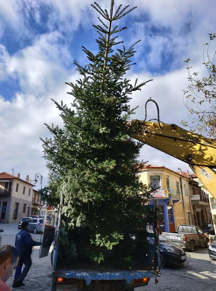 Η Πολιτιστική Εταιρία Αρναίας τοποθέτησε Χριστουγεννιάτικο Δέντρο στην Κεντρική Πλατεία Αρναίας.