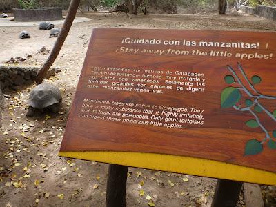 Hippomane mancinella