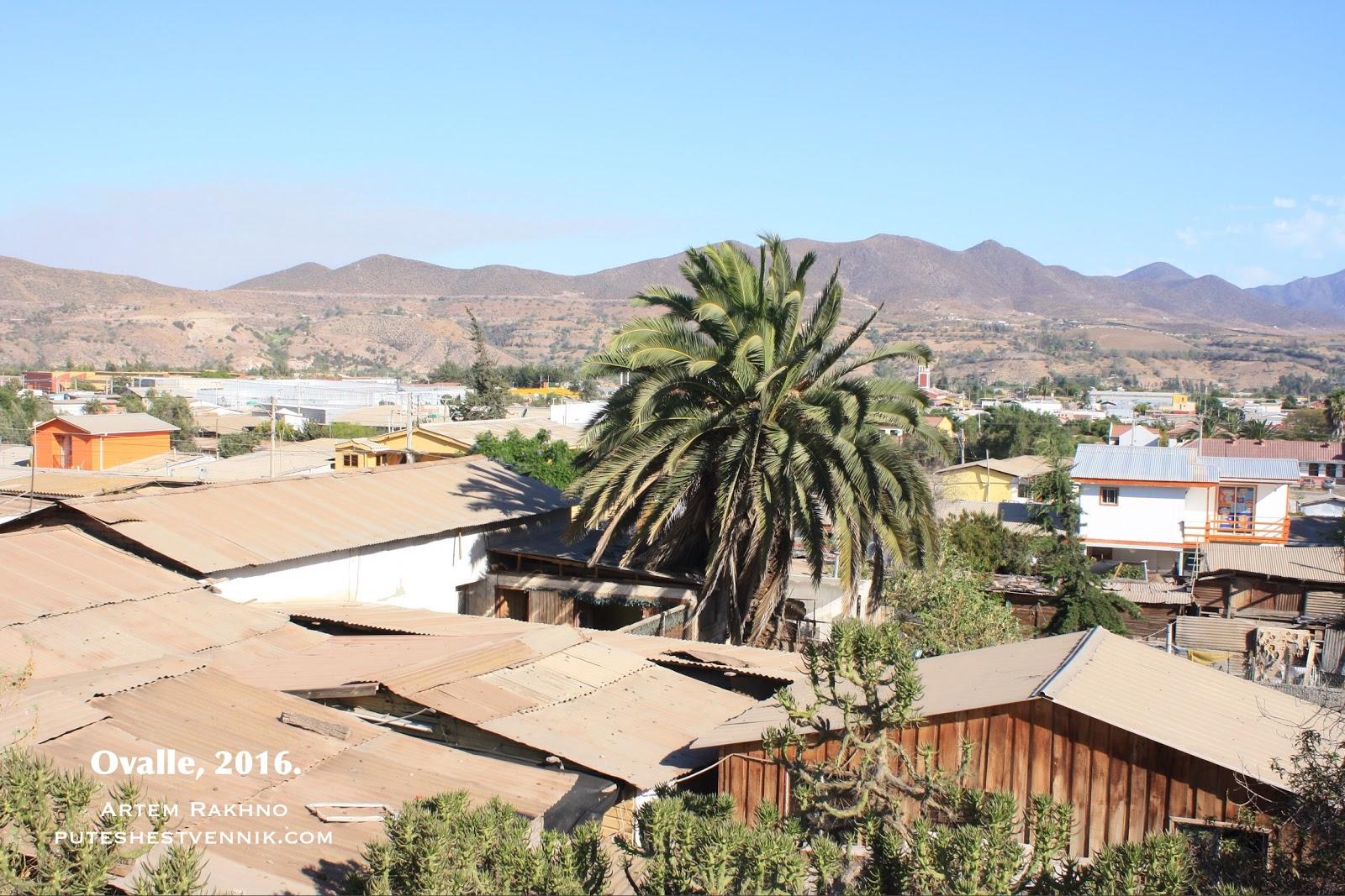 Пальма в городе Овалье