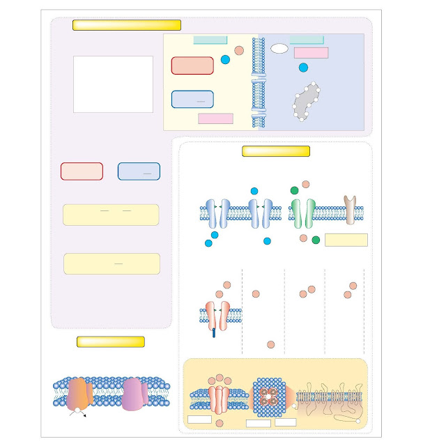 Membrane Potential, Ion Channels And Pumps, Resting membrane potential, Ion channels and gating, Voltage-gated channels, Ion pumps and membrane potential