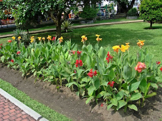 http://tukangtamankaryaalam.blogspot.com/2016/02/pohon-kana-pohon-kana-presinden-bunga.html