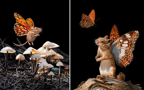 00-Lisa-Ericson-Mouserflies-and-Friends-Paintings-X-Men-Among-Animals-www-designstack-co