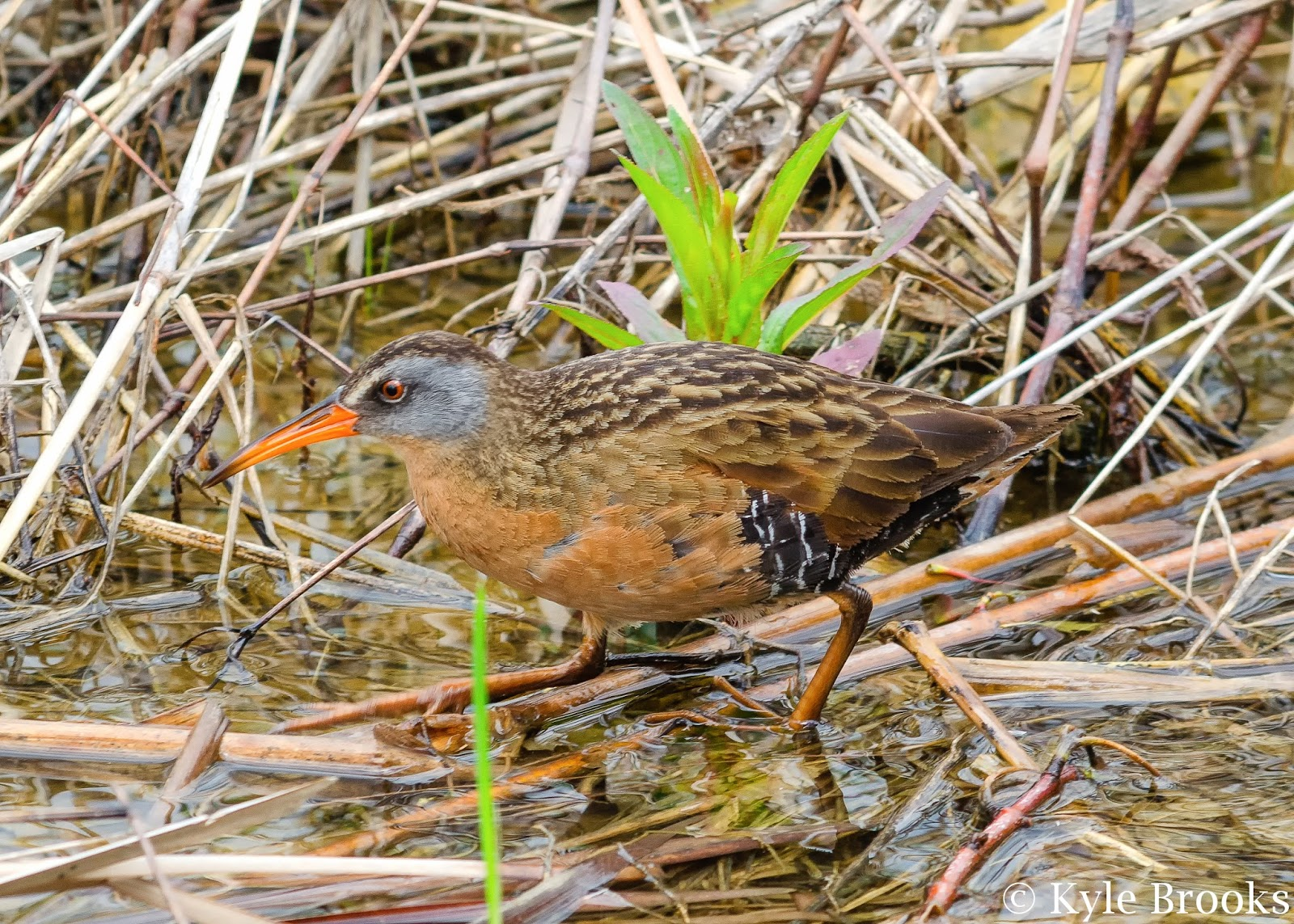 Virginia Rail Ohio