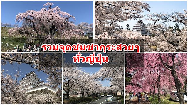 Sakura Spot in Japan