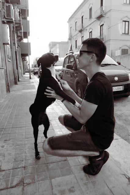 Pies na Sycylii Trapani