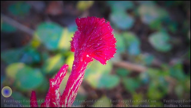 FeelHappyFeelGood Photography~21~