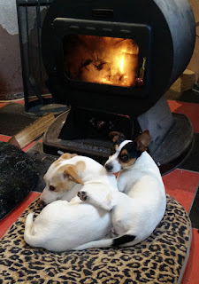 Two puppies keeping warm